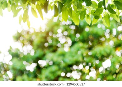 Fresh and green leaves background.