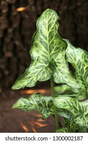 Fresh green leaves. Close Up nature of green leaf on a blurred brown background