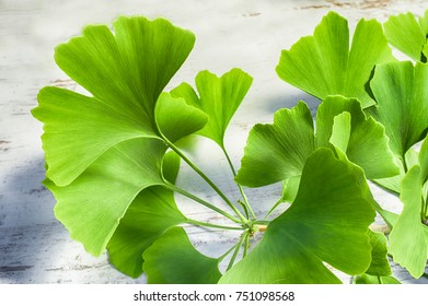 fresh green leaves of the Ginkgo biloba tree on a white wooden vintage table