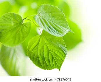 fresh green leaves isolated