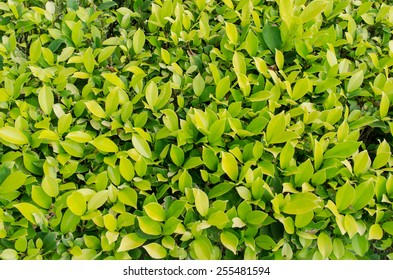 fresh and green leaves on background
