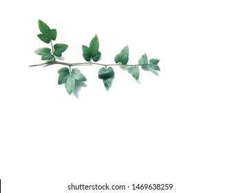 Fresh green leaves on white background.