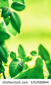 Fresh green leaves in spring - saving nature, healthy environment and bioenergy concept. The best time to plant a tree is now