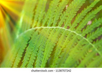 Fresh green leaves textures and sunlight. nature background concept.