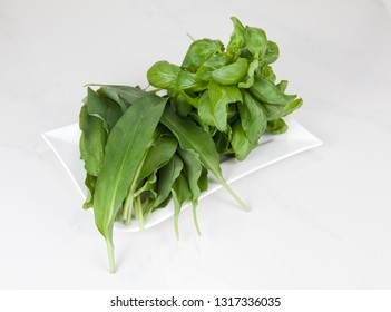Fresh green leaves of wild garlic and basil on a white plate on a light background
