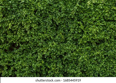 Fresh green leaves.Green background with leaves