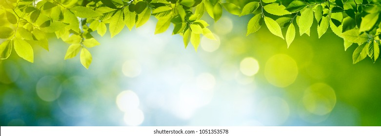 Fresh and green leaves,Natural backgrounds.