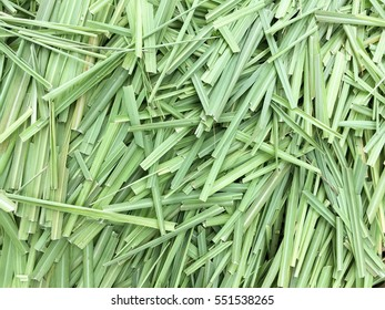 fresh green lemon grass leaves