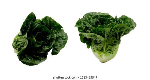 fresh green lettuce isolate over white background