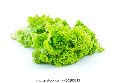 Fresh green lettuce isolated on a white background