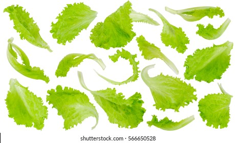 Fresh green lettuce leaves isolated on white background