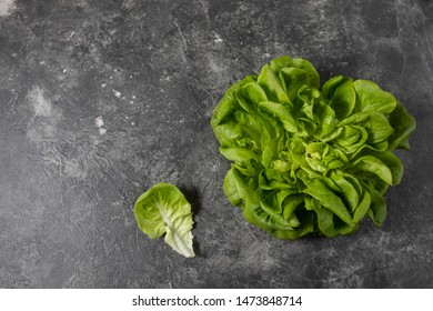 Fresh green lettuce on a dark background, top view with crpic space