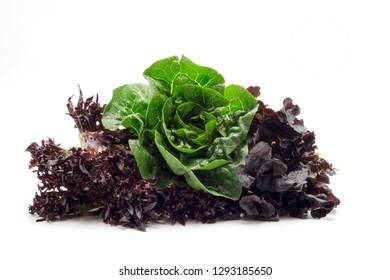 fresh green lettuce red lettuce salad over white background