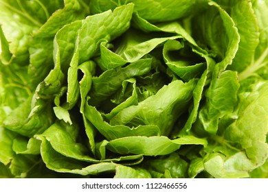 Fresh green lettuce romaine, background. Close-up, top view, copy space.