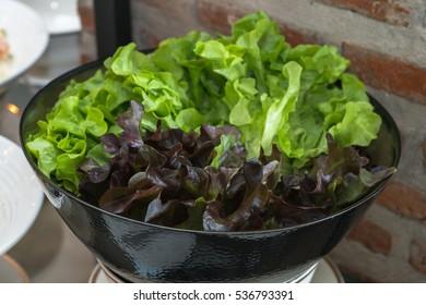 Fresh green Lettuce salad background