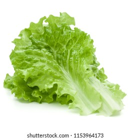 fresh green lettuce salad leaves isolated on white background