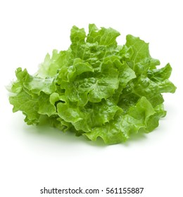 fresh green lettuce salad leaves isolated on white background.