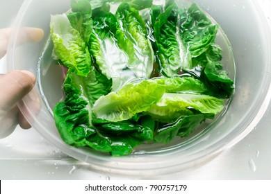 fresh green lettuce soak in water inside plastic bowl