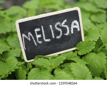 Fresh green Melissa plants with sign