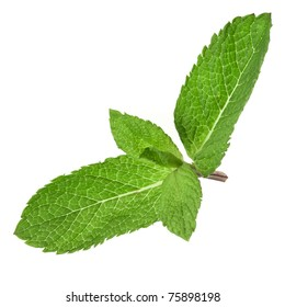 Fresh green mint isolated