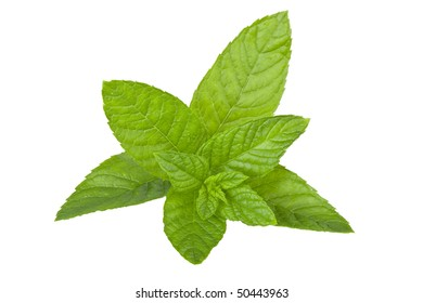 Fresh  Green Mint Leaf On isolated white Background