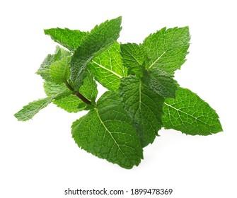 Fresh green mint leaves on white background