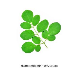 Fresh green Moringa oleifera leaves or (daun kelor), isolated on white background.