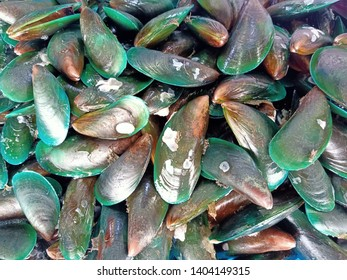 Fresh green mussel shell background