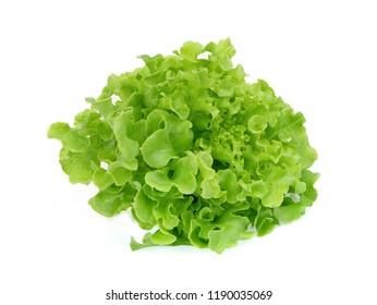 fresh green oak lettuce salad leaves isolated on white background