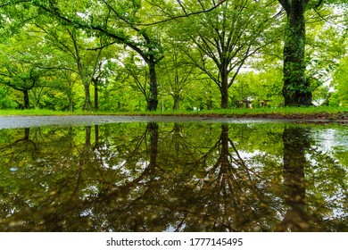Fresh green park Reflection after rain