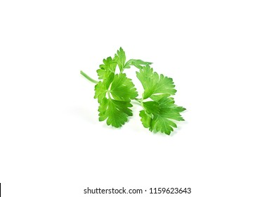 Fresh green parsley isolated on white background. Food ingredients