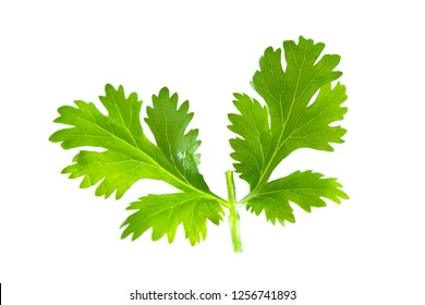 Fresh green parsley isolated on white background. Food ingredients.