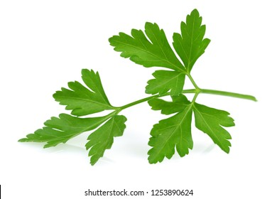 Fresh green parsley leaf, isolated on white background