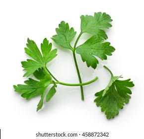 fresh green parsley leaves isolated on white background, top view