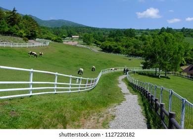 Fresh green and pasture landscape, Makiba park, Kiyosato highland, Yamanashi, Japan