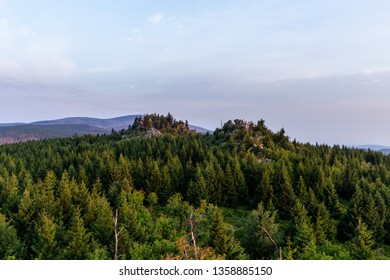 Fresh green pine forest, with a view to the Brocken in the Harz national Park