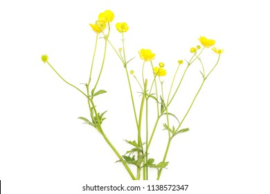 Fresh green plant meadow buttercup with yellow flowers flatlay isolated on white