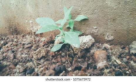 Fresh green plant on a loamy soil