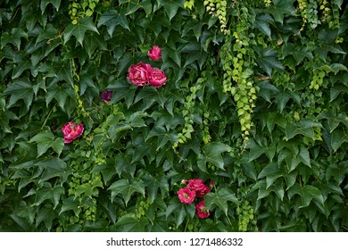 Fresh green  plant wall