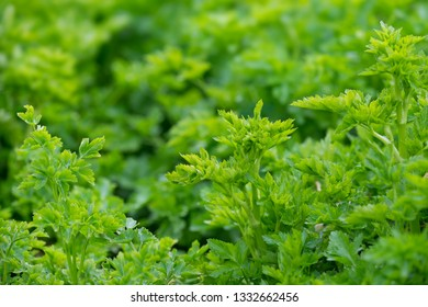 Fresh green plants with a gradient from sharpness to blur