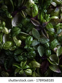 Fresh green and purple basil leaves pattern, top view