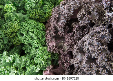 Fresh green and purple curly kale food background