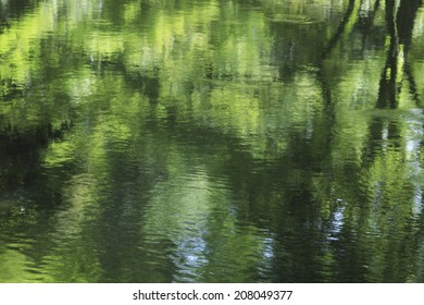Fresh Green Reflection In Water Surface