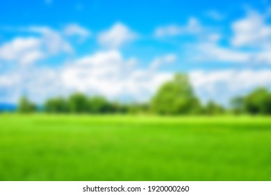 Fresh green rice fields and blurry sky