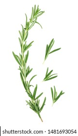 Fresh green rosemary isolated on a white background, top view. Rosemary twig and leaves.