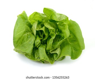 Fresh green salad isolated on white background. Food background with drops of water. Fresh butterhead salad. Green butter lettuce vegetable or salad on white surface.