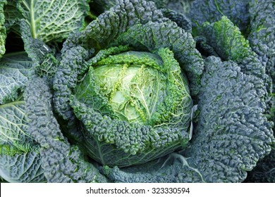 fresh green savoy cabbage from germany