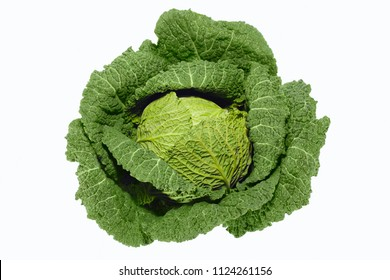 Fresh green savoy cabbage isolated on white background - High Angle View
