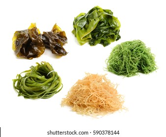 fresh green seaweed on white background