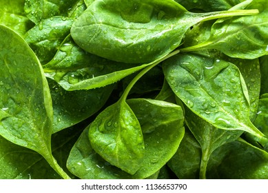 Fresh green spinach, background with leaves, vegetable diet and vegetarian food concept
